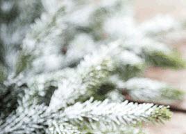 Julbild.jpg