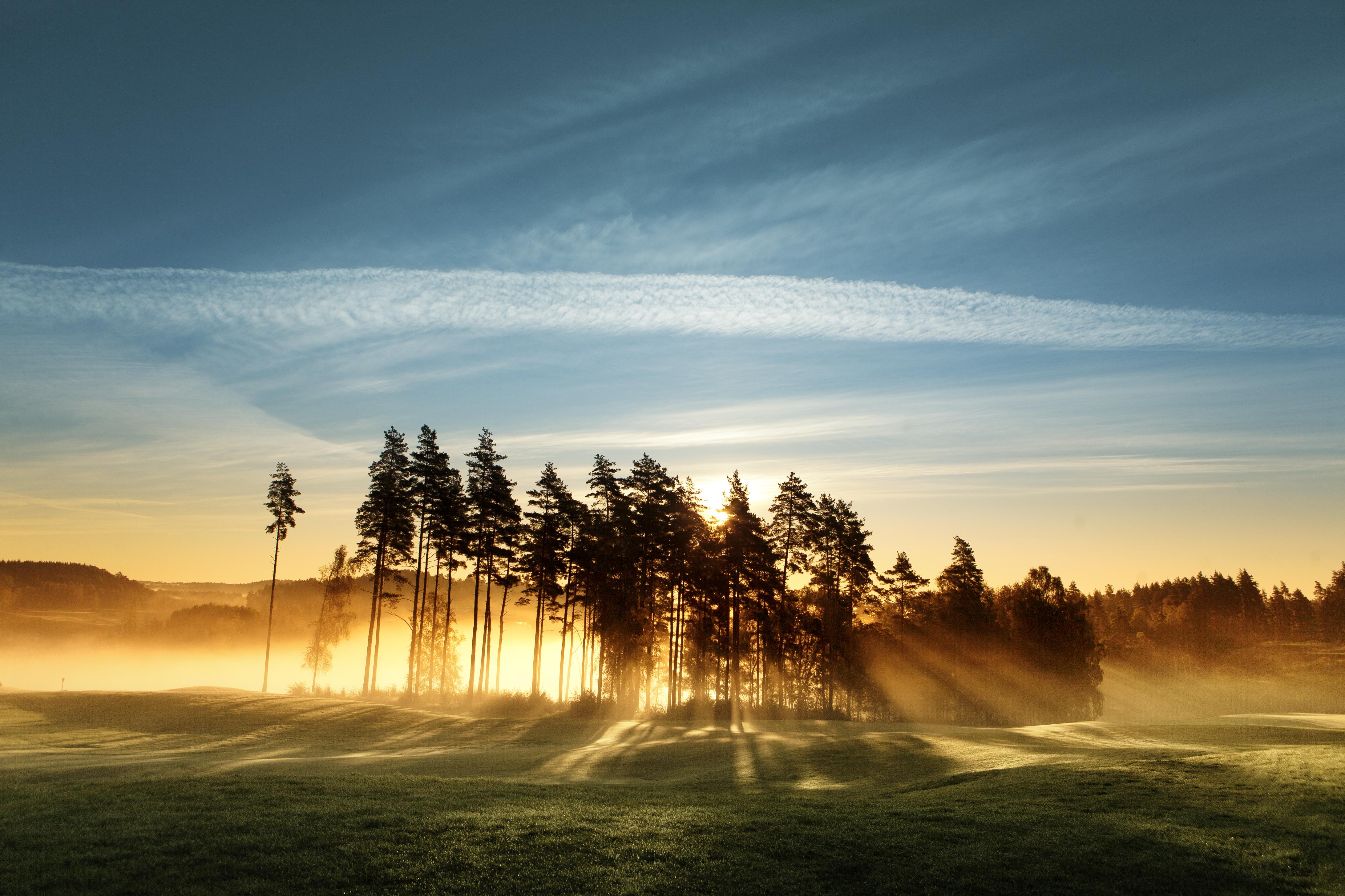 Träd på äng i Sverige